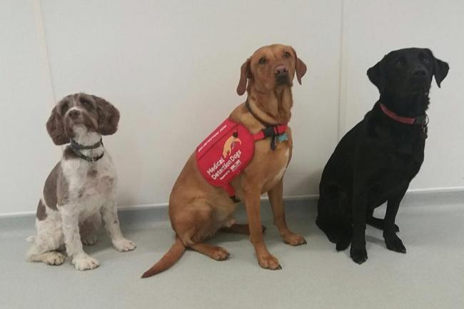Detection dogs Lizzie, Flint and Oakley