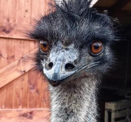 Herbrandston & Narberth Dental Health Practices' missing emu has now been found safe and well.
