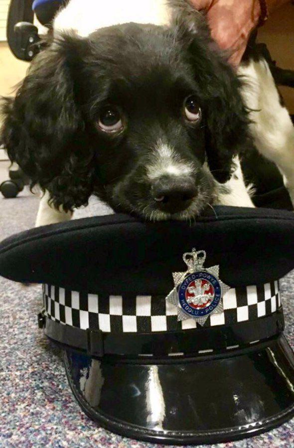 Police dog Billy helped sniff out the drugs