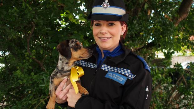 PUPPY POWER: PCSO Laura Galdo with three-year-old Nessy, sporting a yellow ribbon. PICTURE: Milford Mercury. (7375253)