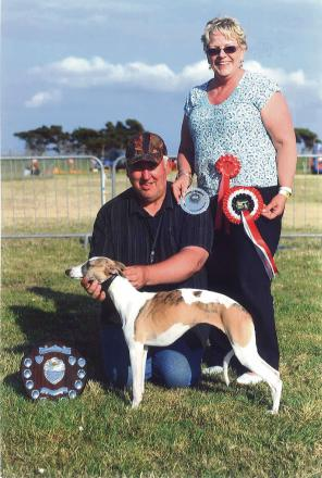 WONDER WHIPPET: Phoebe lives up to her 'Simply the Best' Kennel Club name by winning Championship Best Whippet.