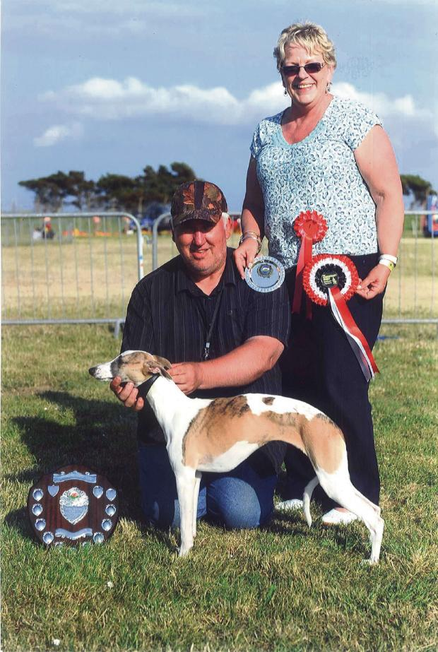 Milford Mercury: WONDER WHIPPET: Phoebe lives up to her 'Simply the Best' Kennel Club name by winning Championship Best Whippet.