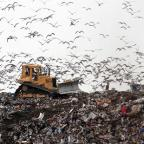 Milford Mercury: The committee said more than a third of food waste goes to landfill, where it produces potent greenhouse gas methane